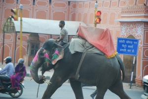elephant in Jaipur traffic