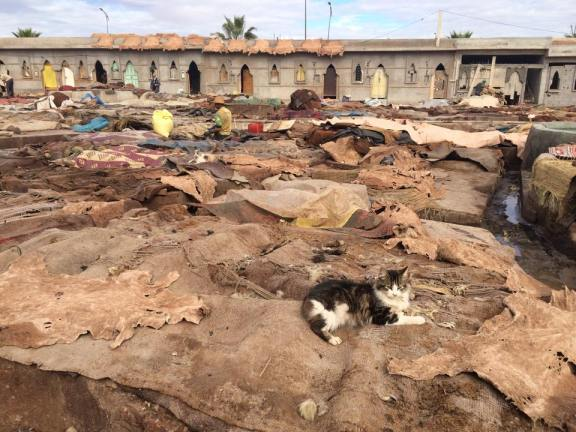 cat in tannery