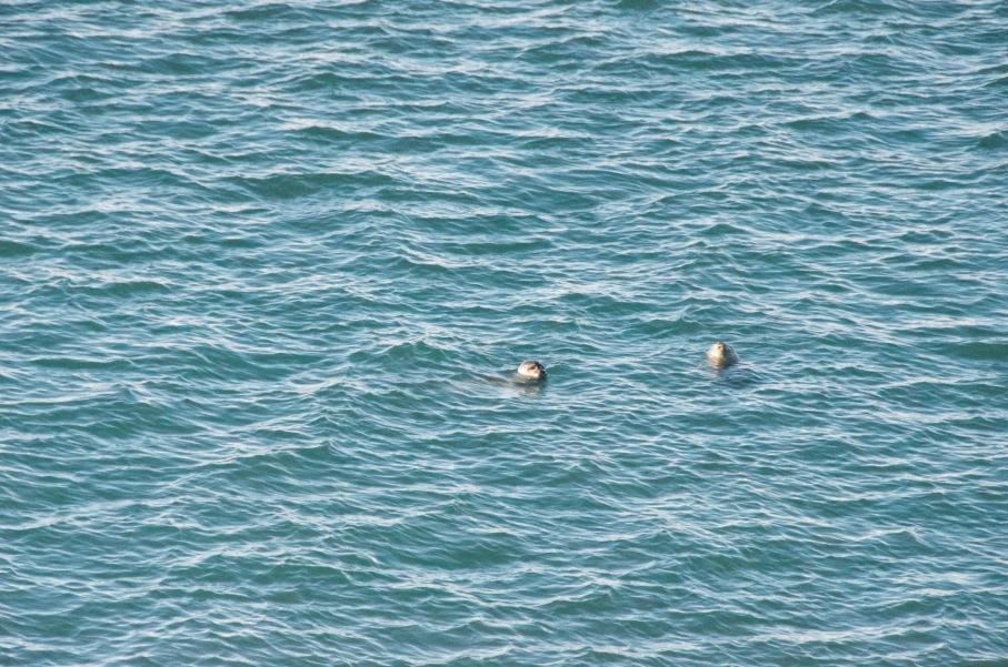 sealsinglacierlagoon